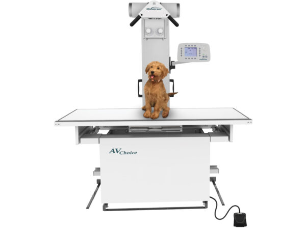 dog on a del medical veterinary system